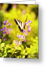 Those Summer Dreams Greeting Card by Darren Fisher