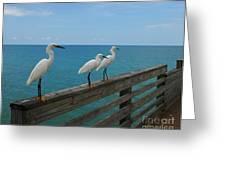 Three Amigos Greeting Card by Mel Steinhauer