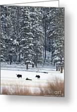 Three Bull Moose Greeting Card by Deby Dixon