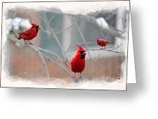 Three Cardinals In A Tree Greeting Card by Dan Friend
