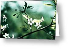 Three Cherry Flowers - Featured 3 Greeting Card by Alexander Senin