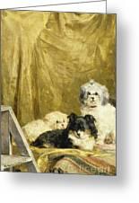 Three Dogs Greeting Card by Charles van den Eycken