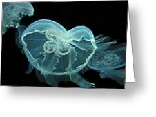 Three Jellyfish  Greeting Card by Wayne King