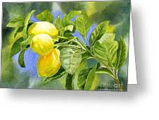Three Lemons Greeting Card by Sharon Freeman