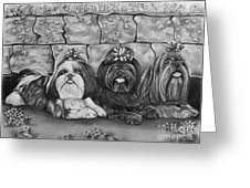 Three Little Shih Tzus Greeting Card by Lena Auxier