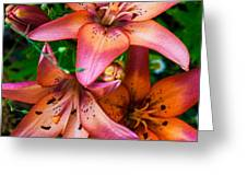 Three Pink Lilies Greeting Card by Omaste Witkowski
