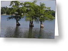 Three Trees Greeting Card by Cim Paddock