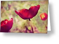 Three Tulips Greeting Card by Silvia Ganora