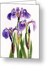 Three Wild Irises On White Greeting Card by Sharon Freeman