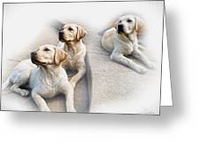 Three's Company Greeting Card by Peter Chilelli