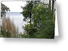 Through The Trees Greeting Card by Carolyn Ricks