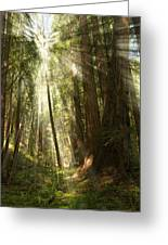 Through The Trees Greeting Card by Mick Burkey