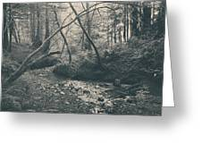 Through The Woods Greeting Card by Laurie Search