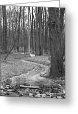 Through The Woods Greeting Card by Sara  Raber