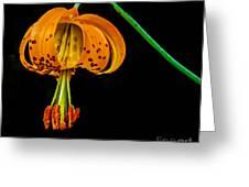 Tiger Lily Greeting Card by Robert Bales