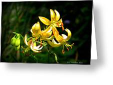 Tiger Lily Greeting Card by Tammy Wallace