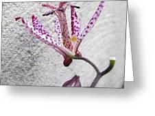 Tiger Lily Greeting Card by Valia Bradshaw