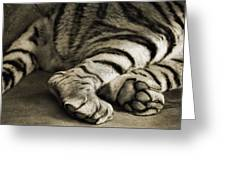 Tiger Paws Greeting Card by Dan Sproul