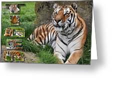 Tiger Poster 1 Greeting Card by John Hebb