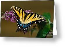 Tiger Swallowtail Butterfly Greeting Card by Joe Elliott