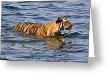 Tigress Of The Lake Greeting Card by Fotosas Photography