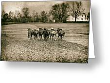 Tilling the Fields Greeting Card by Tom Mc Nemar