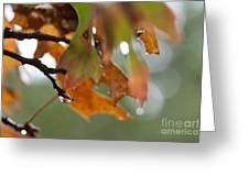Tiny Leaf Greeting Card by Barbara Shallue