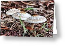 Toadstools V7 Greeting Card by Douglas Barnard