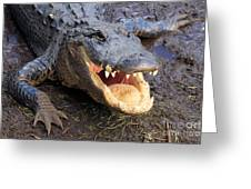 Toothy Grin Greeting Card by Adam Jewell