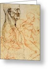 Torso Of A Man In Profile Greeting Card by Leonardo da Vinci