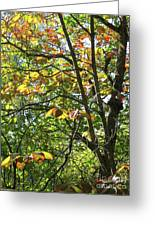 Touch Of Autumn Greeting Card by Ann Horn