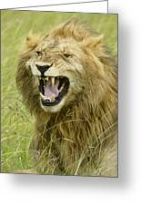 Tough Guy Greeting Card by Michele Burgess