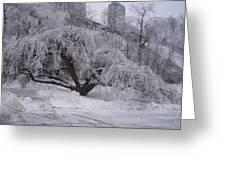 Tracks By A Tree Greeting Card by Anastasia Konn