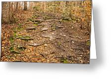 Trail In Ryder Conservation Land Greeting Card by Frank Winters