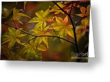 Tranquil Collage Greeting Card by Mike Reid