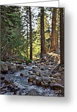 Tranquil Forest Greeting Card by Peggy J Hughes