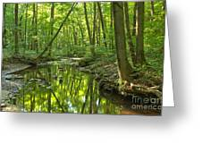 Tranquility In The Forest Greeting Card by Adam Jewell