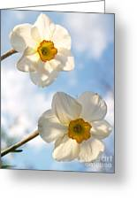 Transcendent Jonquils And Sky Greeting Card by Anna Lisa Yoder