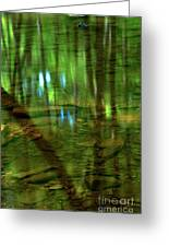 Translucent Forest Reflections Greeting Card by Adam Jewell