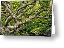Tree #1 Greeting Card by Stuart Litoff