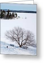 Tree And The Point In Winter Greeting Card by Rob Huntley