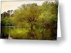 Tree At High Tide Greeting Card by Linda Olsen