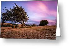 tree at sunset Greeting Card by John Farnan