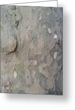 Tree Bark Greeting Card by Jenna Mengersen