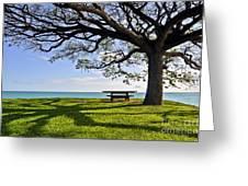 Tree Canopy Greeting Card by Gina Savage