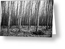 Tree Farm Greeting Card by Chalet Roome-Rigdon