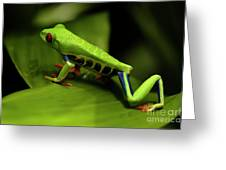Tree Frog 12 Greeting Card by Bob Christopher