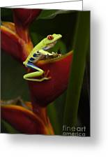 Tree Frog 3 Greeting Card by Bob Christopher