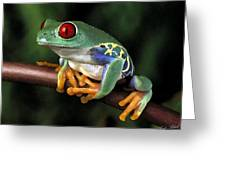 Tree Frog Greeting Card by Cole Black