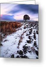 Tree In A Field Greeting Card by John Farnan